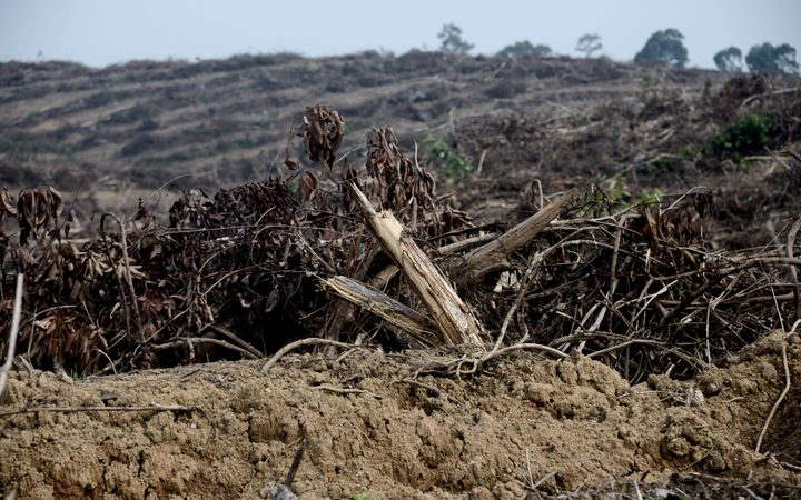 Oil palm licenses revoked in Papua's Merauke